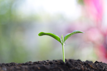 Young green sapling plant growing