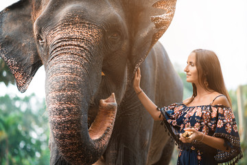 the girl is petting the elephant. tint