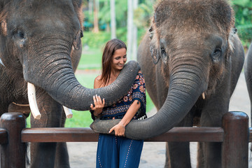 two elephants playing with a young girl .hugging the trunk