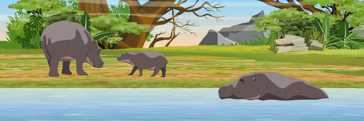 Hippos by the lake. African savannah. Bush and jungle. Wild animals of southern Africa. Realistic vector landscape.
