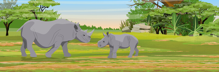 Family of African rhinos. Mother and her cub.Wild animals of Africa. African savannah. Bush. Jungle. Realistic vector landscape.