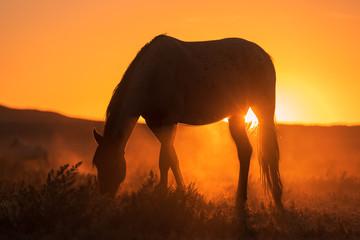 Wild Horse Silhouetted in a Utah Desert Sunset