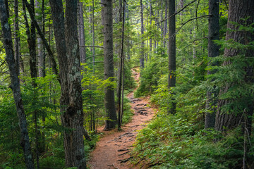 Foto op Plexiglas Verenigde Staten A trail in a lush forest along the Kancamagus Highway, in White Mountain National Forest, New Hampshire