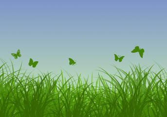 Green grass, butterflies and blue sunny sky spring landscape. Perfect for backgrounds