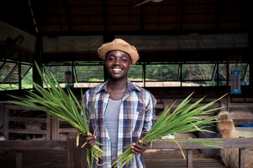 Smile African farmer man holding grass.