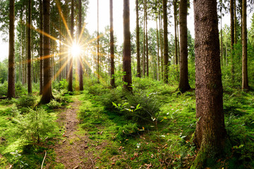 Beautiful forest in spring with bright sun shining through the trees