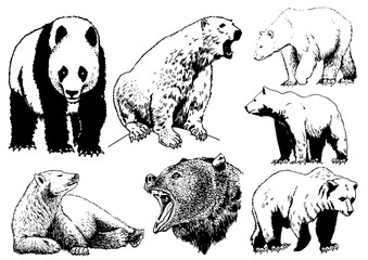 Graphical set of bears isolated on white background,vector tattoo illustration