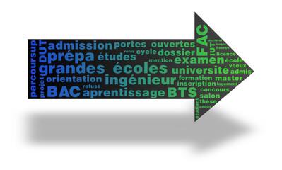 Nuage de mots : Orientation, études supérieures