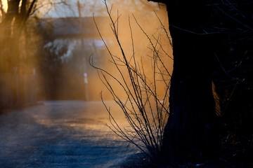 Obraz smuga kurzu unosząca się nad gruntową drogą w zachodzącym słońcu  - fototapety do salonu