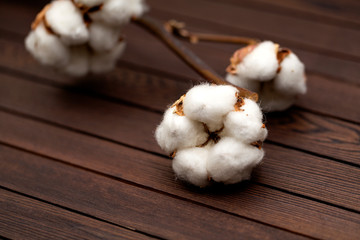 Cotton flowers on wooden background. Closeup