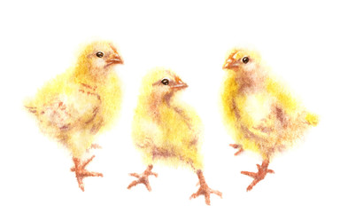 Watercolor Yellow Chickens on White