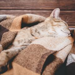 Cute cat sleeping on plaid.