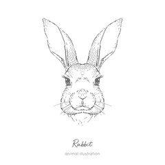 Symmetrical Vector portrait illustration of rabbit farm animal Hand drawn ink realistic sketching isolated on white. Perfect for agriculture farm logo branding design.