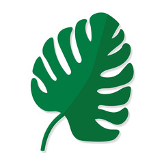 palm tree leave, Monstera tropical plant- vector illustration