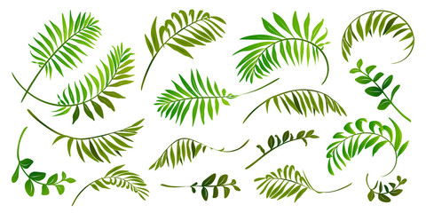 Green tropic leaves vector set isolated on white background