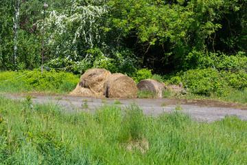 Hay bales in a meadow