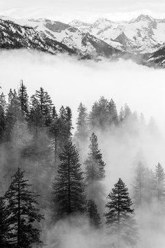 Sequoia Fog