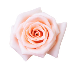 Pink rose isolated on white background, clipping path and - soft focus
