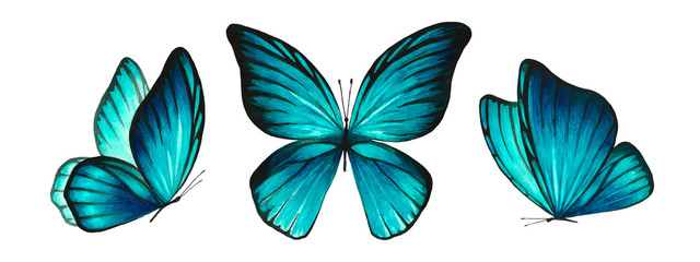 Three watercolor light blue bright butterflies