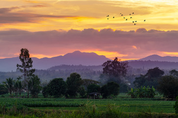 Wall Mural - In the evening, the golden sky, mountain views in Chiang Mai Thailand