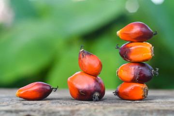 Close Up Of Fresh Oil Palm Seeds