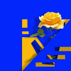 Contemporary modern art poster. with yellow rose on blue abstract background.