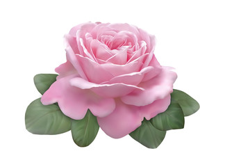 Beautiful vectorized rose flower isolated on white background
