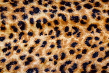 Poster Leopard eopard Seamless Pattern.