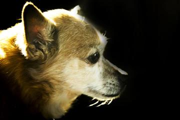 Older dog with epilepsy