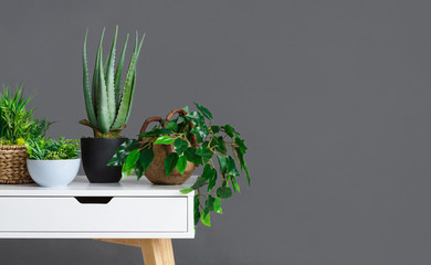 Stylish interior with different houseplants on grey wall