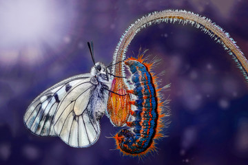 Aluminium Prints Butterfly Amazing moment ,Monarch butterfly and caterpillar