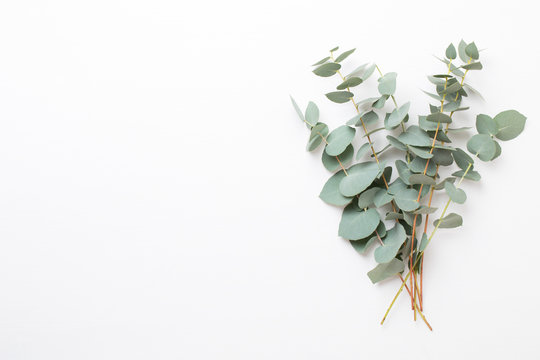 Flowers and eucalyptus composition. Pattern made of various colorful flowers on white background. Flat lay stiil life.