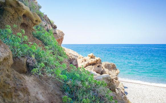 Rock Samphire - Crithmum maritimum Sea Shore Plant. Kritamos plant growing on the rocks on sea background. Super food sea fennel. Cretan herbs for salads.