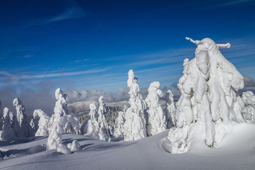 Foto auf Leinwand Nordlicht Beautiful scenery of the snowy winter landscape. View from Kubinska hola mountain in Slovakia, Europe.