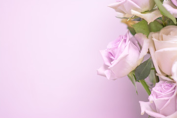 Purple roses and space for design