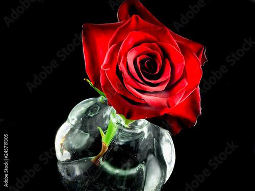 Rosa Rossa Su Sfondo Nero Stock Photo And Royalty Free Images On