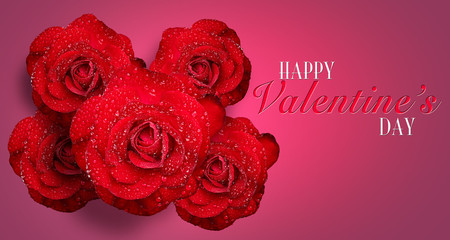 Romantic red rose with water droplets on Pink background