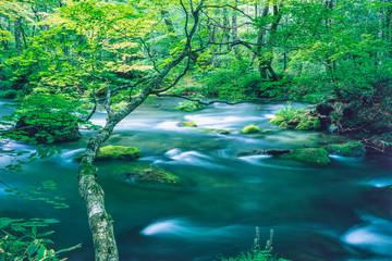 Fototapeta 新緑の奥入瀬渓流 obraz