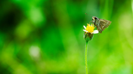 Close up of butterfly on glass flower on the green nature backgrounds