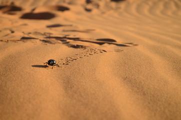 A beetle running through the desert