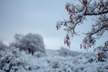 snowy desert winter landscape valley Eastern Sierra Nevadas, California