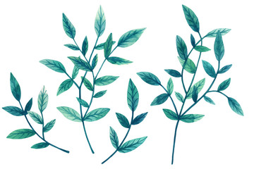 Painted watercolor set of decorative green leaves and branches isolated on white background. Elements for design. Valentine's Day, Mother's Day, Wedding, Birthday. Hand drawn illustration
