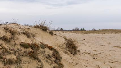 Brandenburger Sanddüne