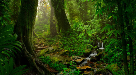 Asian tropical rainforest Wall mural