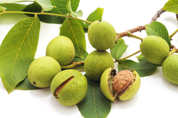 Green walnuts with leaves.