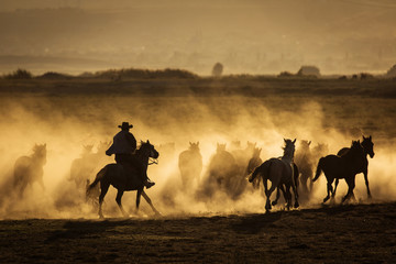 Wild horses leads by a cowboy at sunset with dust in background.