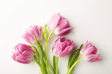 Pink tulips on white background with copy space. Top view, close up.