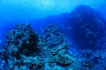 Wall Mural - Beautiful coral scenery underwater in the Bougainville reef