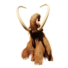 woolly mammoth, running prehistoric mammal isolated on white background