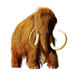 woolly mammoth, extinct prehistoric elephant species isolated on white background (3d illustration)